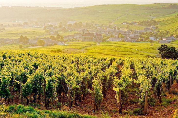 Sunrise over the vineyards of Burgundy, France