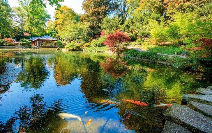 The Japanese Garden in Kaiserslautern makes a great day trip from Ramstein, Germany
