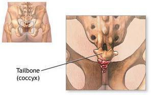 tailbone-coccyx.jpg